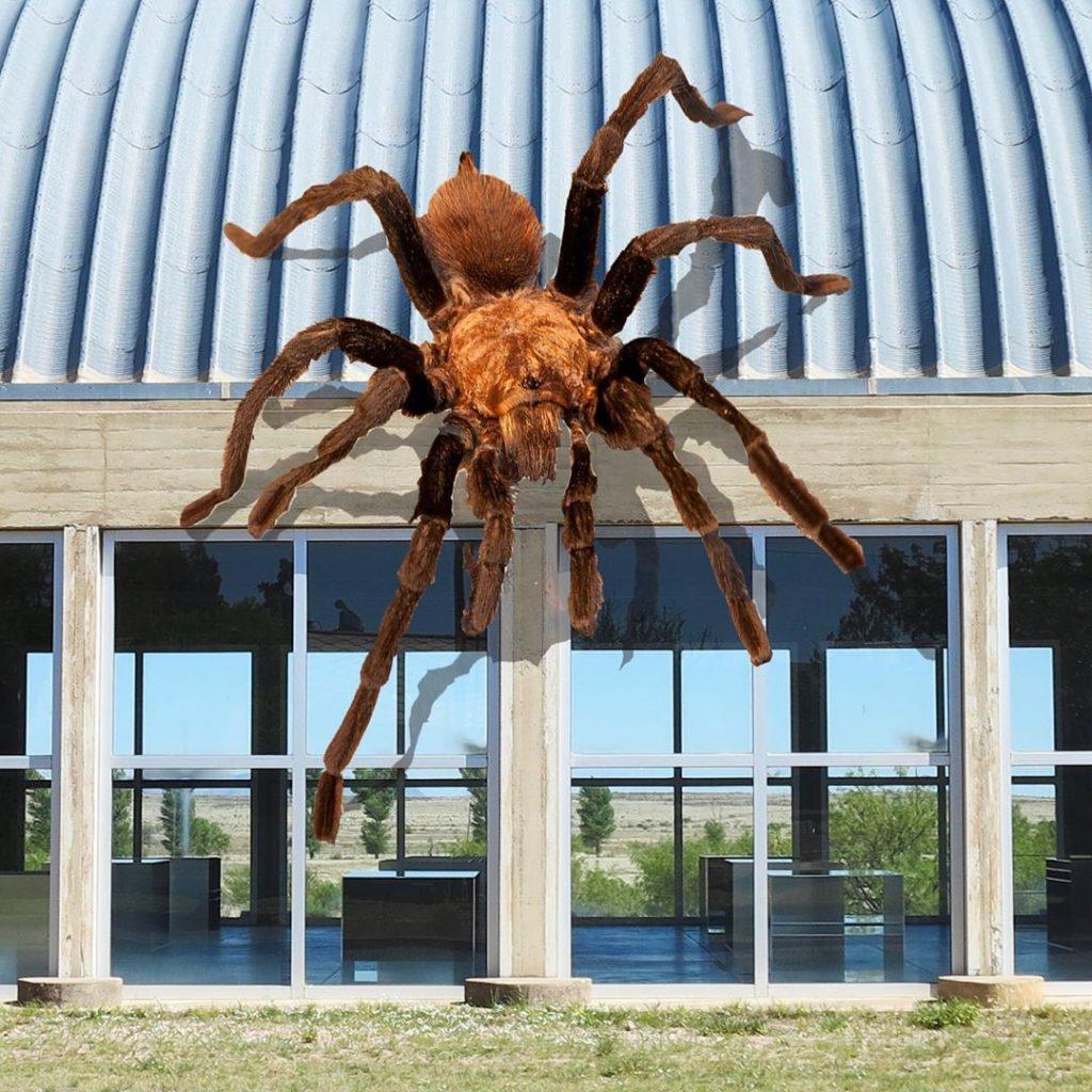 Texas sized brown tarantula on artillery shed!