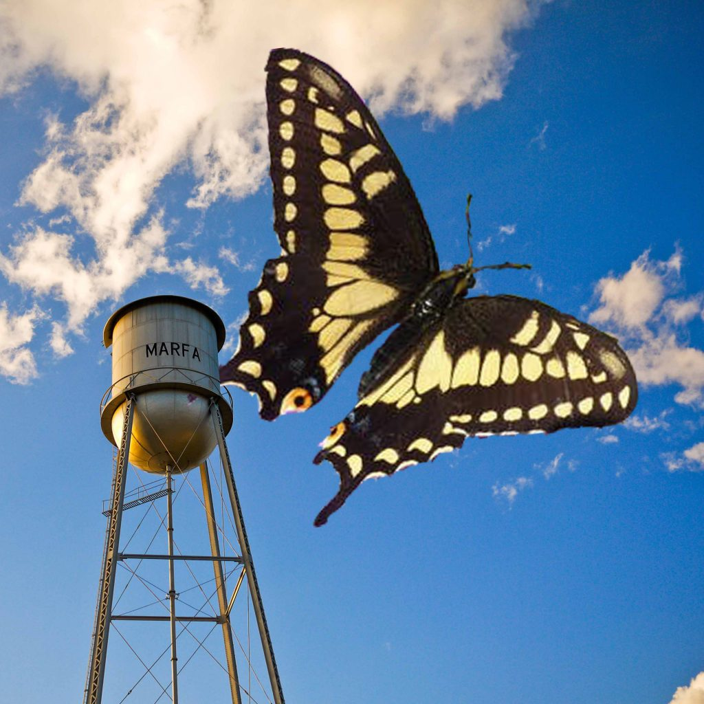 Desert Black Swallowtail and water tower