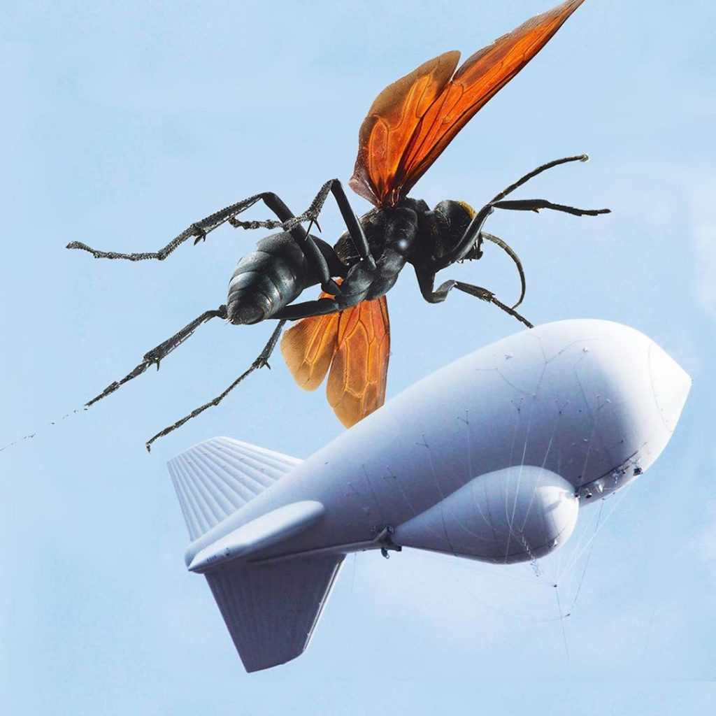 Texas sized tarantula hawk and Tethered Aerostat Radar System (TARS) blimp.
