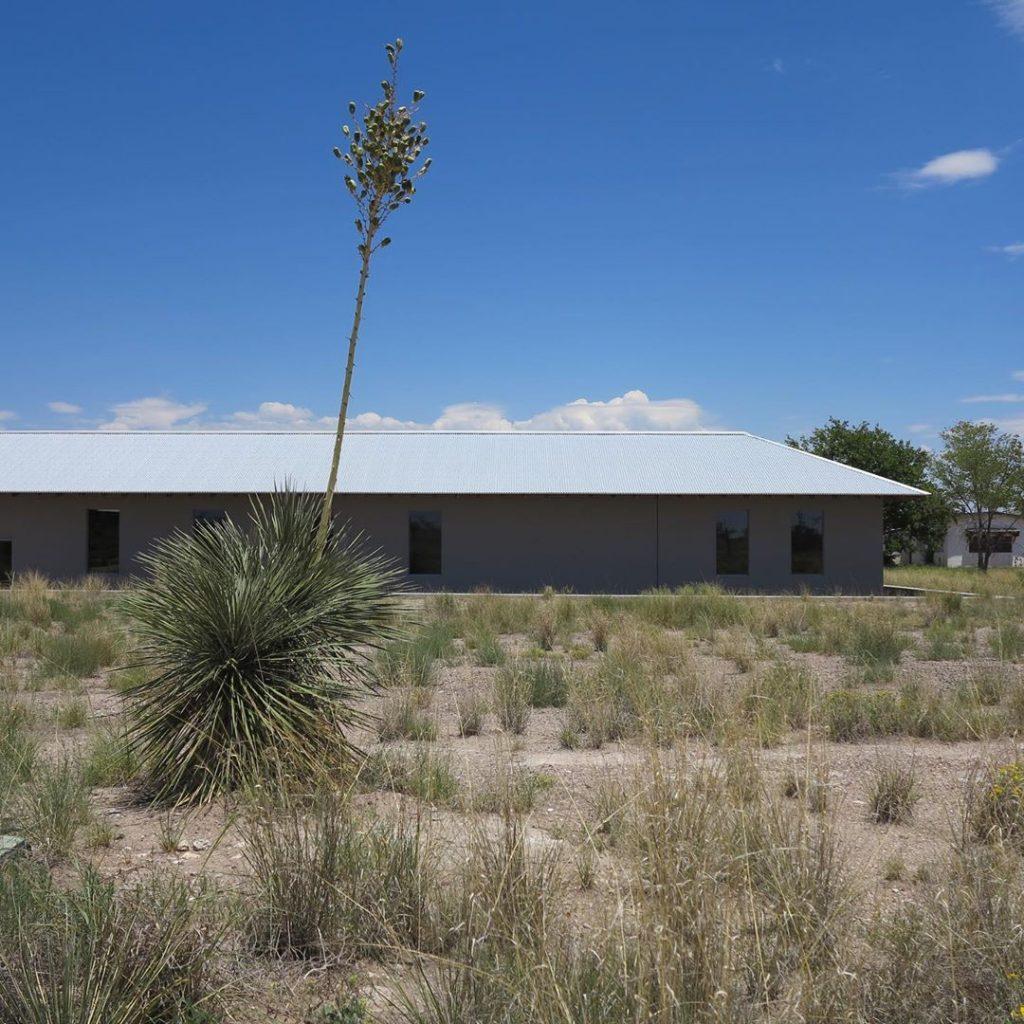 Soaptree yucca near Irwin installation.